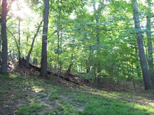 木漏れ日が差す森林