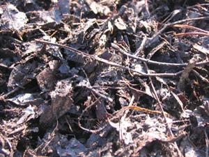 落葉や落枝が、腐植してできた腐葉土