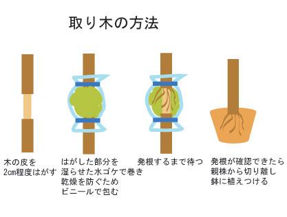 取り木の方法