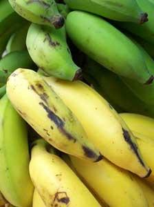 収穫後、後熟過程を経て流通するバナナ
