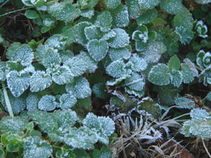霜は、空気中の水分が固体化したもの