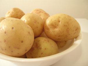 人工的な組織培養によって、耐病性のあるジャガイモが育成されている