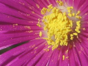 花粉を食物とする生き物は多い