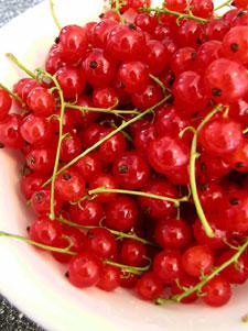 レッドカーラント(赤すぐり)は多肉果のうち、漿果(しょうか)に分類される